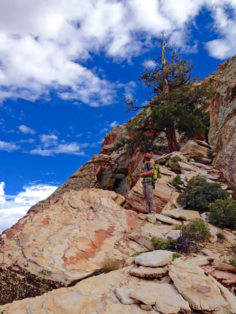Photo: Colby B - High up on Epinephrine, IV 5.9, 14 pitches, 2200'. Red Rock Canyon, Nevada.